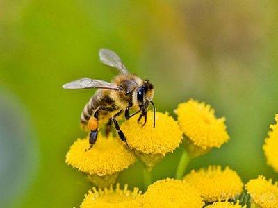 В Казани пройдет учеба для пчеловодов республики
