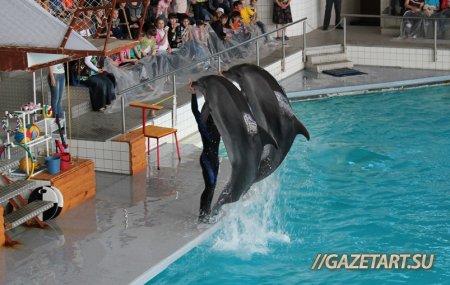 Новые артисты Набережночелнинского дельфинария скоро порадуют зрителей
